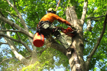 TREE PRUNING | TRIMMING